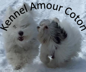 Kennel Amour Coton