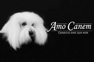 Amo Canem