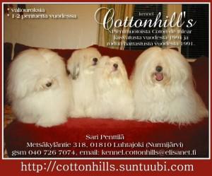 http://cottonhills.suntuubi.com